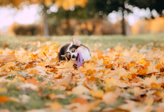 Mi mascota juega en las hojas