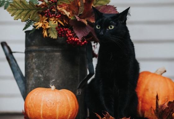 Ooooooooo, it's Halloween!