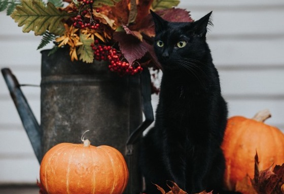 Mon animal fête Halloween