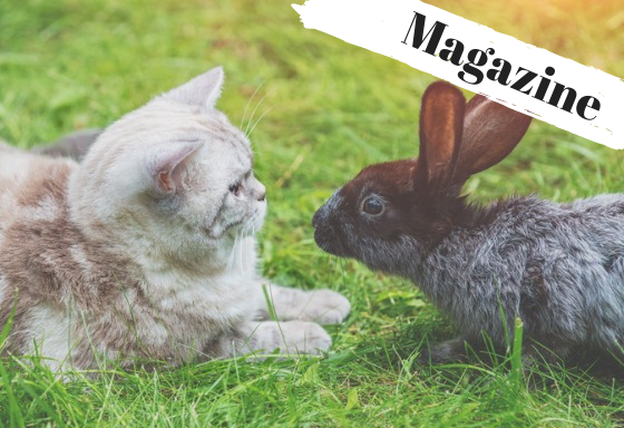 Animal Duo