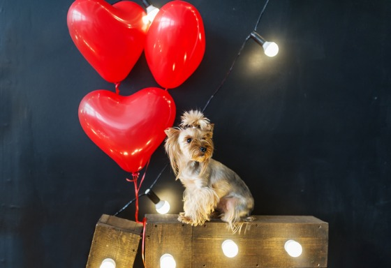 Mi animal celebra San Valentín