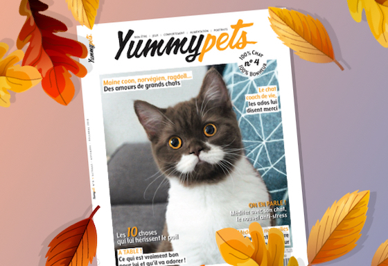 Magazines, newspapers and books are pawsome!