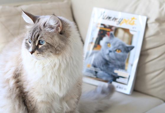 Prenez votre animal en photo avec le magazine Yummypets