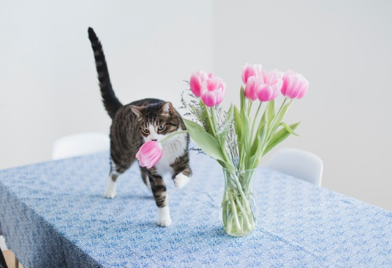 My pet adores flowers