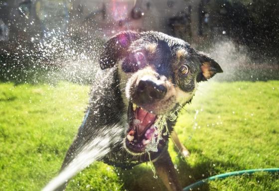 My pet loves water