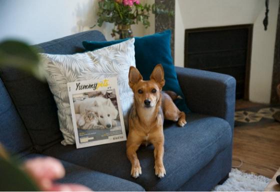 Haga una foto de su animal con la revista Yummypets