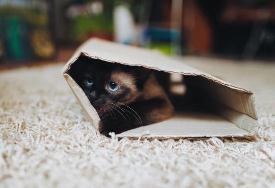 Mon chat adore les cartons