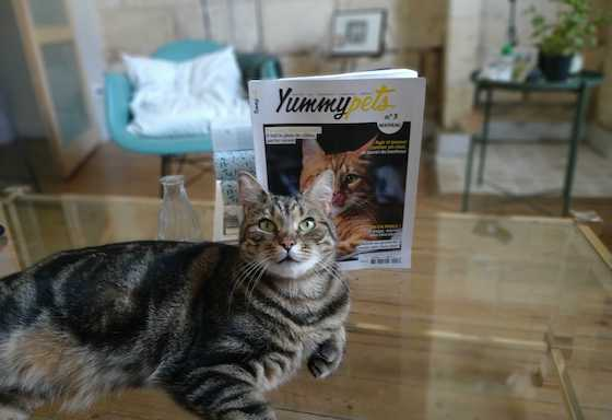 Take a photo of your pet with the Yummypets magazine