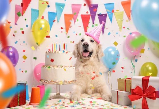 Mi mascota celebra su cumpleaños