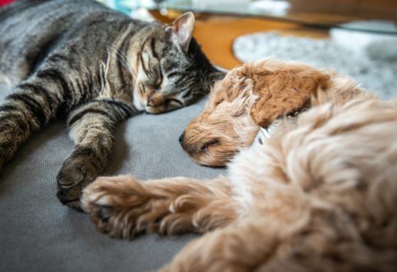 Mi animal adora dormir