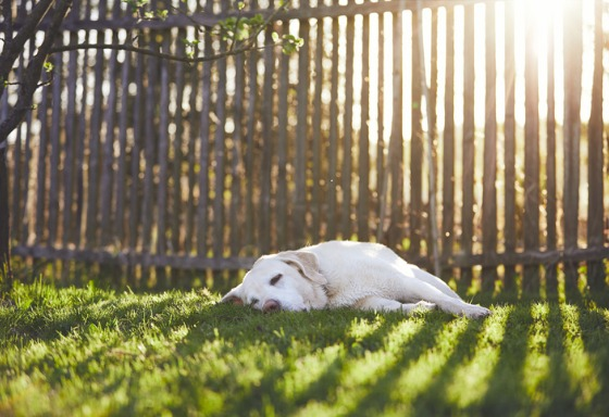 Mon animal lézarde au soleil