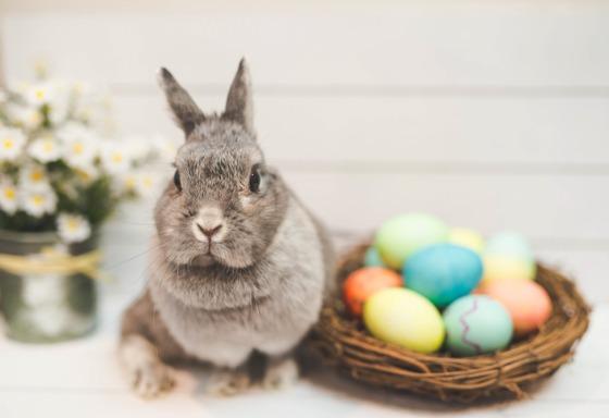 Mon animal fête Pâques