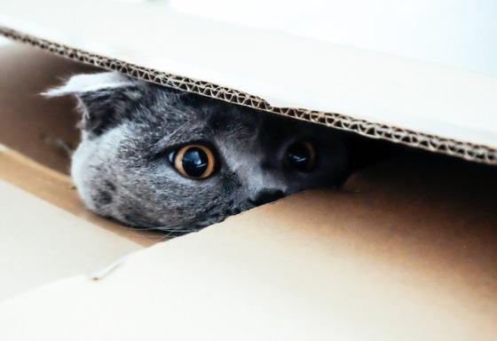 Mon animal joue à cache-cache