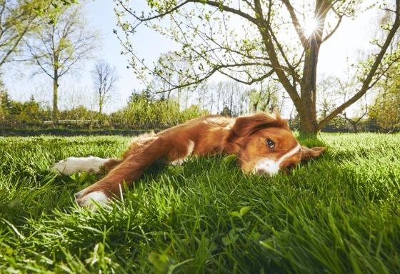 Mon animal se prélasse au soleil
