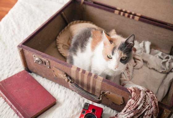 Mon animal fait sa valise