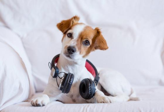 Mon animal adore la musique