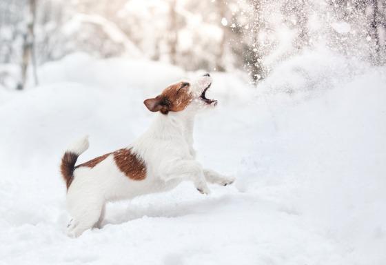 Mi animal juega en la nieve