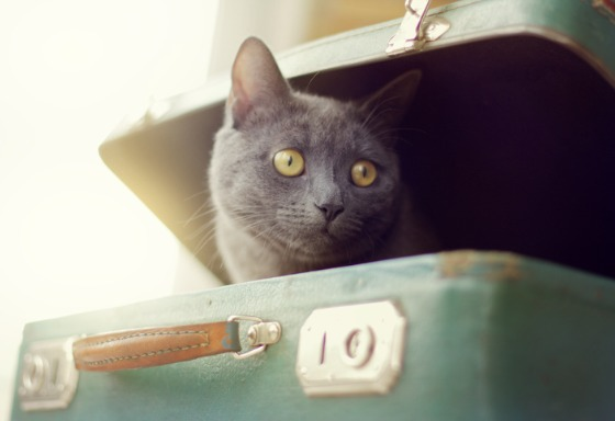 My pet is packing for vacation