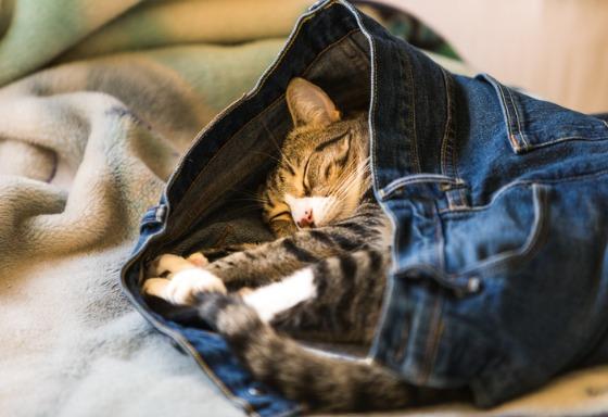 Mon chat dort sur mes vêtements