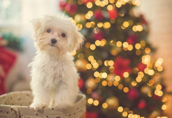 Mi animal y el árbol de Navidad